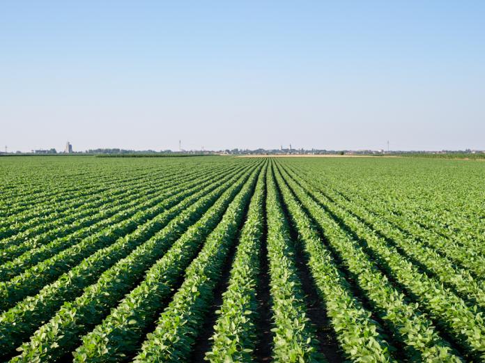 paraguay soya field